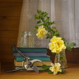 Roses in the shed