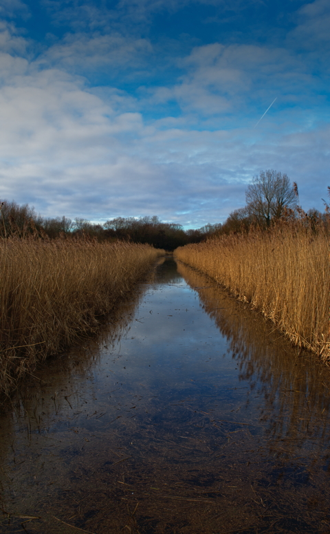 Springwell Reed Bed